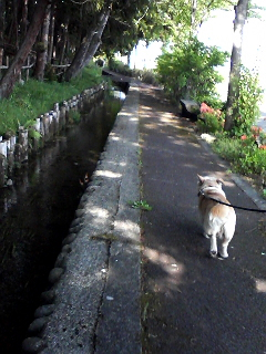 湧き水を 残す村