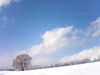 ホントの冬。