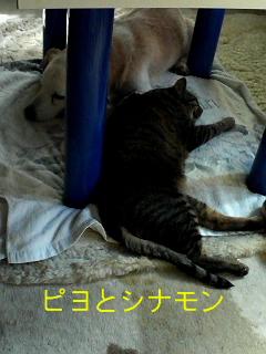 シナモンとピヨ