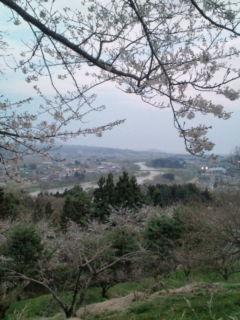 桜香る時間。