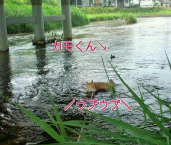 33℃の日は。
