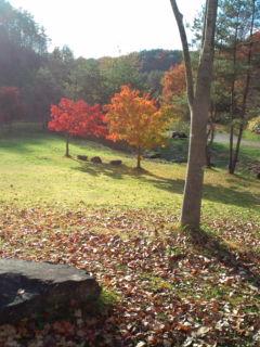 秋晴れの休日。