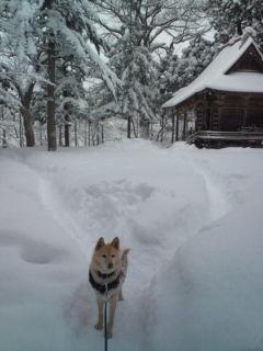雪のお正月。